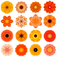 Collection Various Orange Concentric Flowers Isolated on White