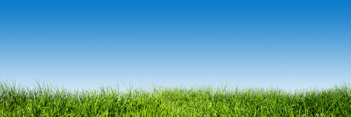 Spoed Foto op Canvas Gras Green grass on blue clear sky, spring nature theme. Panorama