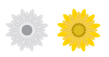 Abstract Flowers on White Background. Vector Illustration.