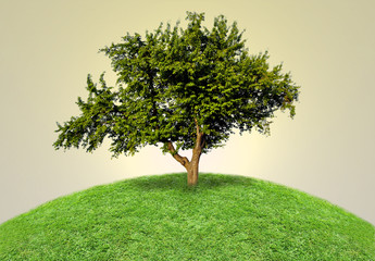Green isolated tree