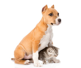 dog and little cat sitting together. isolated on white backgroun