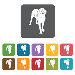 Labrador icon. Dog icons set. Rectangle colourful 12 buttons. Ve