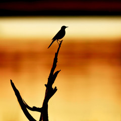 silhouette of the bird on the background of the river