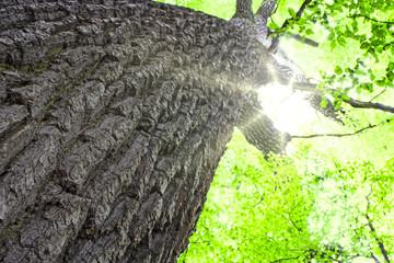 Sonnenstrahlen durch Baumkrone