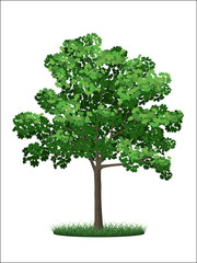 Realistic tree and grass on a white background