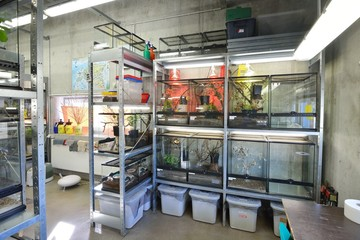 Entomological laboratories in the Zoo