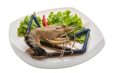 Freshwater prawn