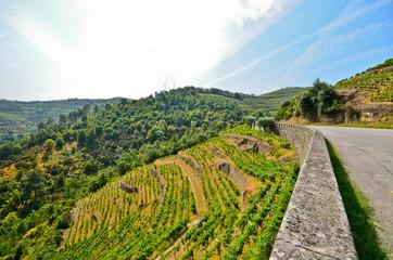 Douro Valley - Weinberge und Strasse Peso da Regua, Portugal