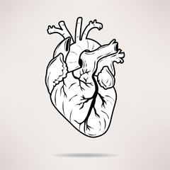 Icon Body heart icon. On the white background. Vector