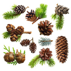 Set of fir evergreen tree branches and cones