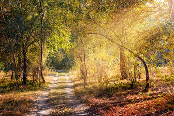 A warm sun ray enters in the forest through the tree branches in autumn