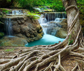 banyan tree and limestone waterfalls in purity deep forest use n