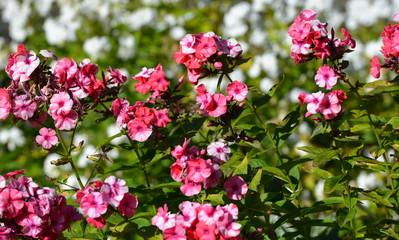 flore...jardin alpin