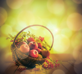 A basket full apples rowan sunset