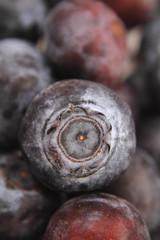 detail of bllueberries
