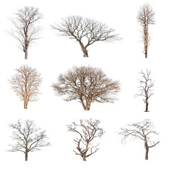 Conlection of trees without leaves isolated on white background