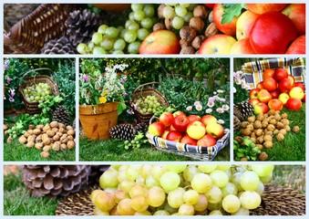 composition,fruits d'automne au jardin