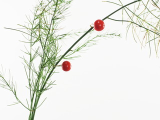 asparagus with red berry