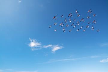 flamingos flock