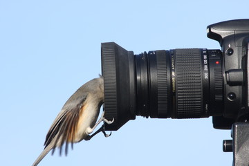 Titmouse On A Camera
