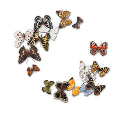 Wreath made of butterflies