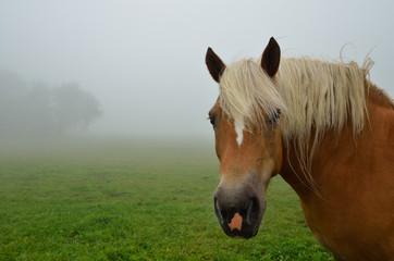 pferd nah und nebel