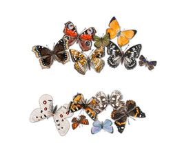 Butterflies with free space for your text in the middle.