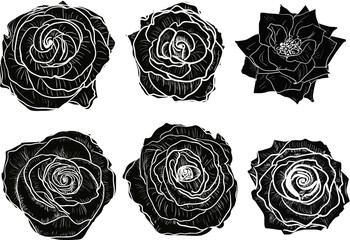 isolated six black and white roses blooms
