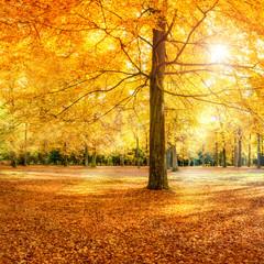 Wall Mural - Großer Baum im Herbstwald