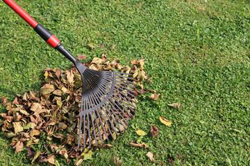 otoño recoger hojas jardinería 8616-f14