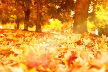 Waldboden mit Herbstlaub und Licht