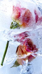 EisblumenPhoto © Herby Meseritsch