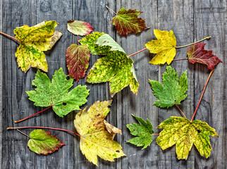 Blätter liegen auf Holz