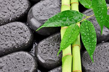 Liście z bambusami na kamieniach do spa