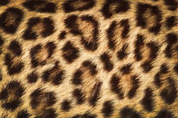 In de dag Luipaard detail skin of leopard