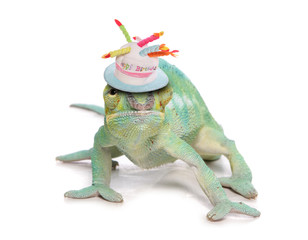 cameleon lizard birthday