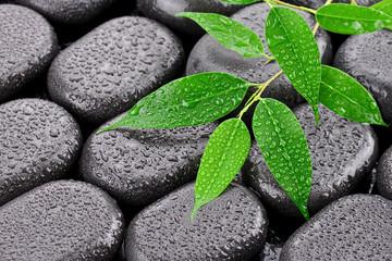 Obraz Mokre liście na kamieniach bazaltowych - fototapety do salonu