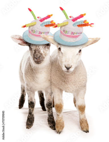 Happy Birthday Lambs Stock Photo And Royalty Free Images On Fotolia