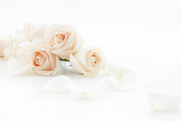 white roses and petals