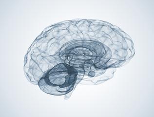 Human brain 3d