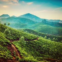 Wall Mural - Tea plantations instagram color filter