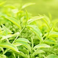 Wall Mural - tea leaves