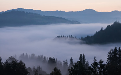 Poster Morning with fog Majestic sunset in the mountains landscape. Carpathian, Ukraine