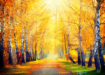 Wall Murals Road in forest Autumnal Park. Autumn Trees and Leaves in sun rays