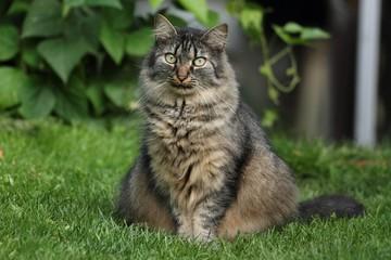Half-wild cat Masha.