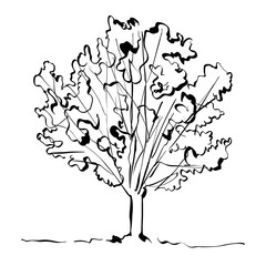 Monochrome hand drawn tree on white background, simple illustrat