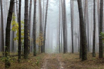 road through foggy forest at autumn, cloudy morning