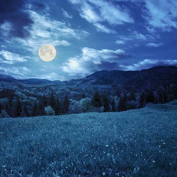 pine trees near valley in mountains  on hillside in moon light