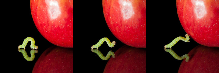 Pest worm an apple collection