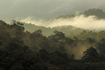 jungle forest and mountain with mist